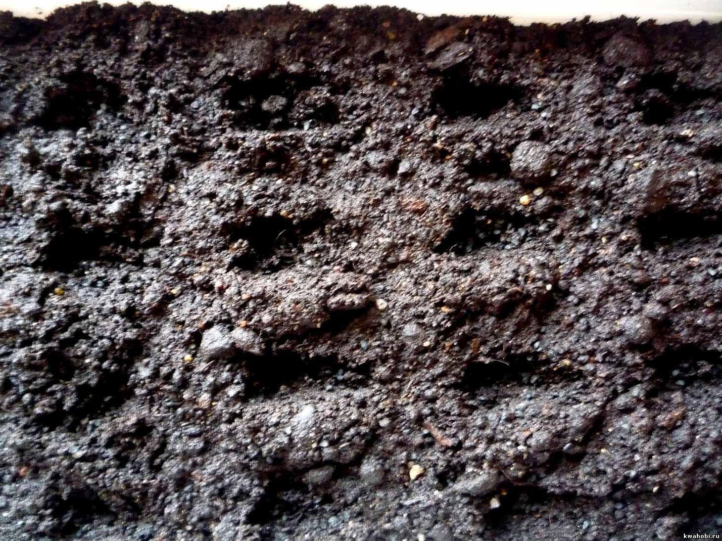 лунки для посадки лука батуна