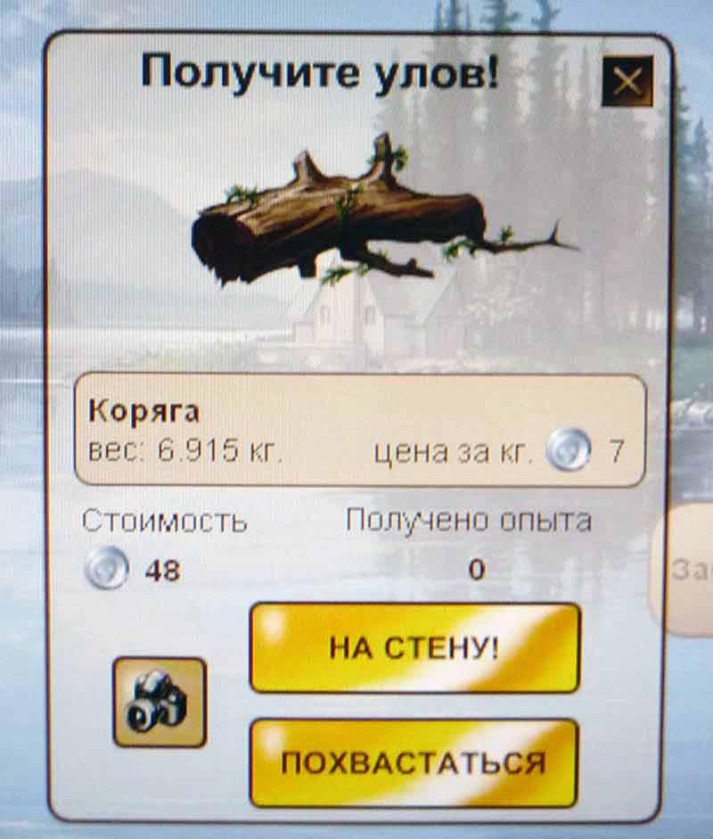 мусор_коряга
